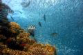 Unterwasserkamera im Einsatz