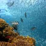 Unterwasserkameras - Bringen eine neue Welt ans Licht